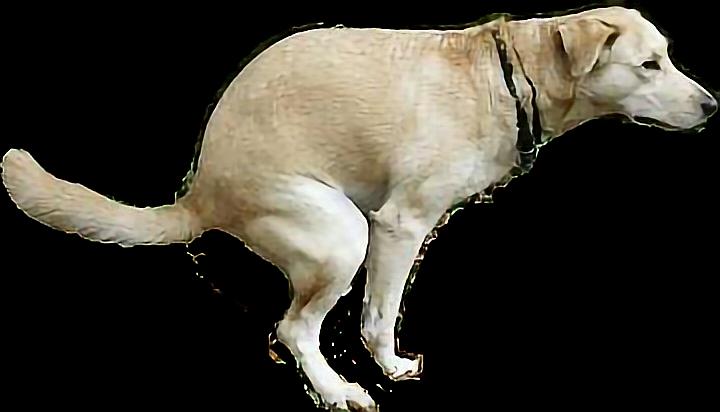 cachorro_cao_animal