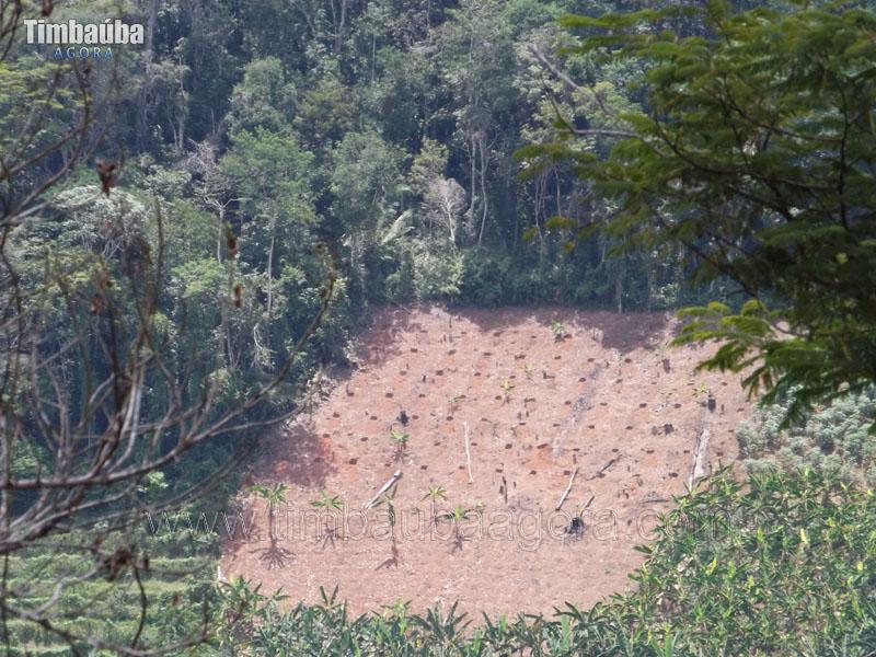 desmatamento-xixa