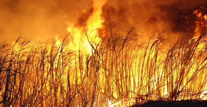 cana_queimando-fogo-no-canavial