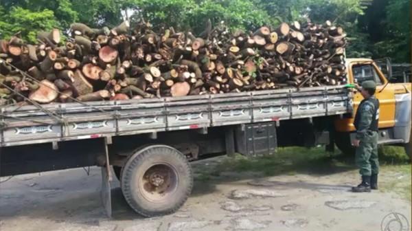 desmatamento_madeiras