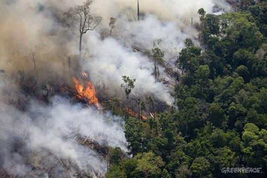 desmatamento-queimada